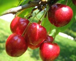 Тонкости ухода за плодовым садом