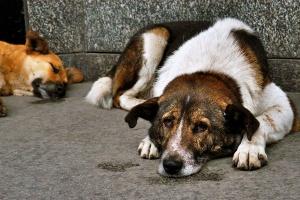 отлова бродячих собак